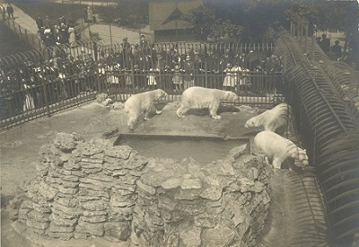 Clown the polar bear that escaped from the washington - Washington park swimming pool milwaukee ...
